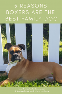 Best Family Dog Breed